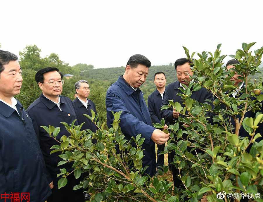 title='习近平在光山县深入油茶园和农村考察调研'